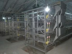 Poultry Automatic Broiler Chicken Cage System