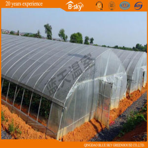 Netherlands Technology Tunnel Green House for Vegetable Planting pictures & photos