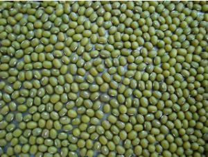 Mung Beans (003)