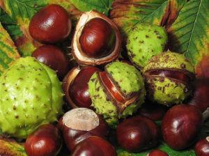 Horse Chestnut Extract/Aescin/Escin/Momordica Charantia P. E pictures & photos