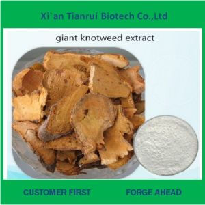 Supply Pure Giant Knotweed Extract Resveratrol 99% pictures & photos