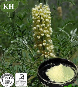 Sophorine, Cytisine 99%, Sophora Alopecuroides Extract pictures & photos
