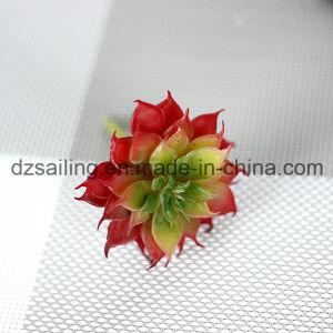 Decorative Plant Natural Touch Artificial Succulents Artificial Flower (SW17671) pictures & photos