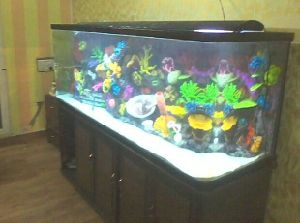 Acrylic Aquarium, Acrylic Fish Tank for Sale pictures & photos