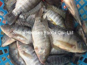 Frozen Fish Black Tilapia with 200-300g pictures & photos