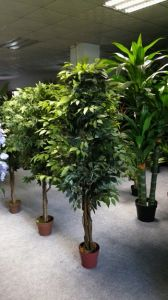 Best Selling Artificial Plants of Ficus Tree pictures & photos