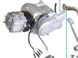 1P50FMG-EX5-Class Supra Engine Automatic-Clutched, 110cc Kick-Started, 6V, Single Clutch