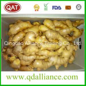 Global Gap Semi Dry Ginger with EU Standard pictures & photos