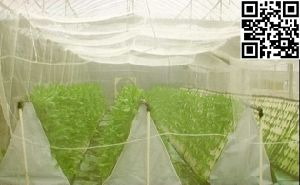 Meyabond Shade Netting, Anti Insect Net (MYB-002) pictures & photos