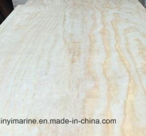 Poplar/Birch/Pine Plywood B/C Grade E1 Glue pictures & photos