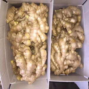 2016 Professional Air Dried Ginger Supplier Hot Sale pictures & photos