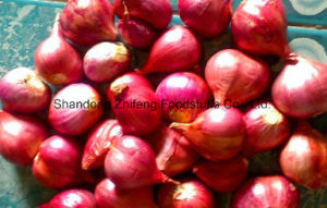 2017 Fresh Season Shallot with Good Price pictures & photos