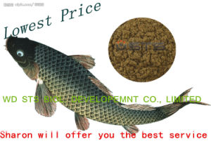 Fish Meal for Fish Feed Animal Feed Additive (protein 55% 65% 72%) pictures & photos