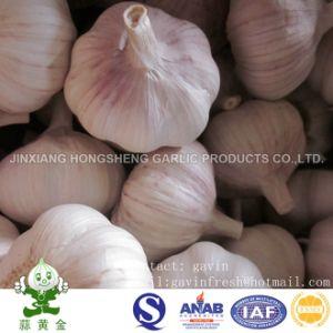 10kgs Carton Packing Normal White Garlic