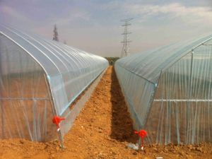 Customized Price Favorite Plastic Shed Green House with High/Low Tunnel Dimension pictures & photos