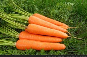 2017 Fresh Carrot on Sale pictures & photos