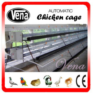 New Design Automatic Layer Chicken Cage pictures & photos