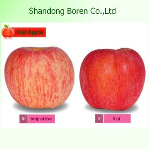2015 Fresh Standard FUJI Apple