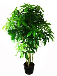Hot Sale Chinese Plant Artificial Pachira Macrocarpa Bonsai pictures & photos