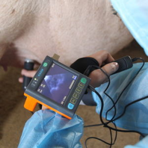 Veterinarian Equipment Ultrasonic Diagnostic Instrument Swine Goat Cow Horse Dog pictures & photos
