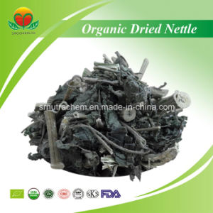 High Quality Organic Dried Nettle pictures & photos