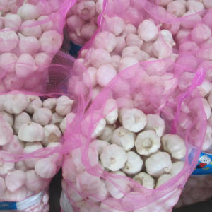 Export Standard Mesh Bag Packing Fresh Normal White Garlic pictures & photos