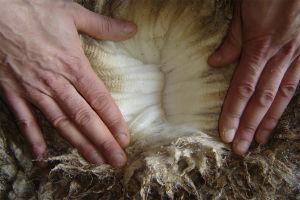 Genuine Australian Salted Sheepskin Spring Lambskin Shorn Sheepskins pictures & photos