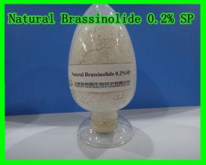 Natural Brassinolide 0.2% Sp-Plant Hormone pictures & photos