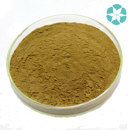 Fennel Extract / Foeniculum Vulgare Extract pictures & photos