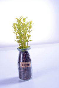 Home or Office Decoration Pleasant Artificial Herbs Plants in Glass Visa pictures & photos