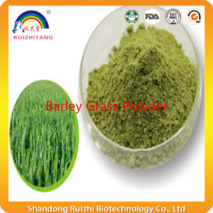 ISO9001 Certificate Natural Top Quality Barley Grass Powder pictures & photos