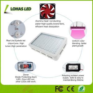 Full Spectrum Hydroponics LED Grow Light 300W 450W 600W 800W 900W 1000W 1200W High Power Grow LED Light for Plants pictures & photos