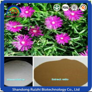 Natural Mesembrine Extract Best Price High Quality pictures & photos
