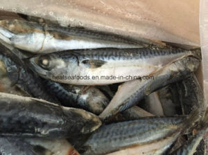 Frozen Blue Pacific Mackerel Fish pictures & photos