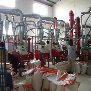 Corn/Maize Flour Milling Machinery for Home Use (6FYF) pictures & photos