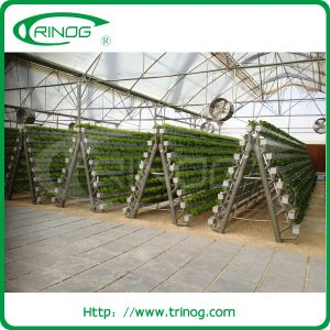 Lettuce Hydroponic Greenhouse with A frame stand pictures & photos