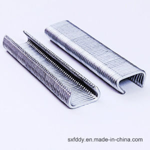 Galvanized Wire 15g50 C Ring Staples pictures & photos