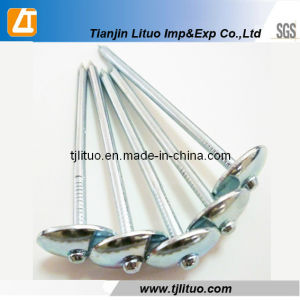 Plain or Screw Gavlvanized Roofing Nails with Umbrella Head pictures & photos