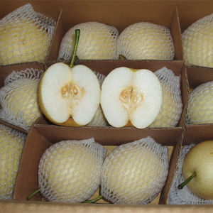 Chinese Golden Pear Good Quality and Price pictures & photos