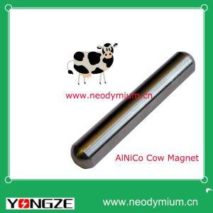 Alnico Cow Magnet