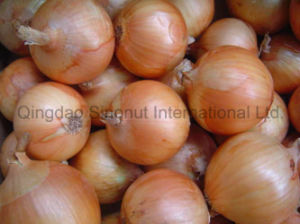 New Crop Fresh Yellow Onion of Good Quality pictures & photos