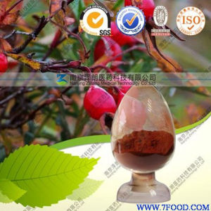 Health Care Product High Quality 100% Natural Rose Hip Extract pictures & photos