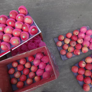2016 Harvest Exported Standard Red Qinguan Apple pictures & photos