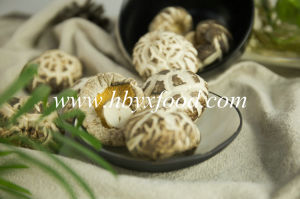 High Quality Dried Great White Flower Mushroom with Different Size pictures & photos