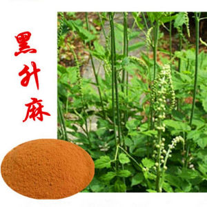 OEM Black Cohosh Extract Triterpenoid Saponins 8% pictures & photos