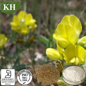Sophora Alopecuroides Extract: Cytisine 98%, 99% pictures & photos