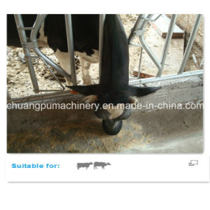Dairy Farm Equipment Self-Locking Headlock pictures & photos