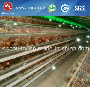 Cheaper Price Farm Layer Cages pictures & photos