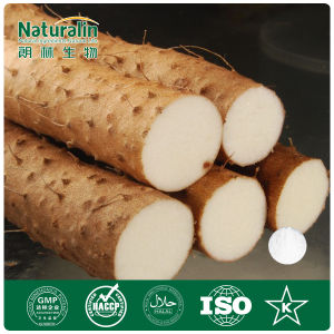 100% Natural Common Yam Extract Powder (8%-95% Diosgenin)