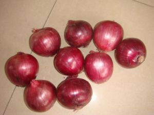Fresh Red Onion (new crop) pictures & photos